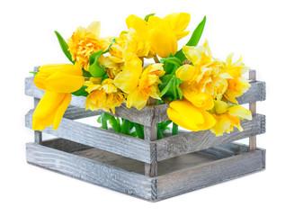 Osterglocken, Tulpen in Holzkiste