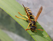 wasp summer grass