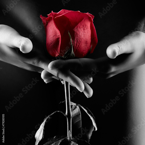 Obraz Silhouette of nude woman with red rose isolated on black