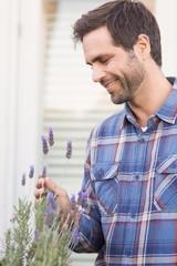 Happy man smelling his lavender plant