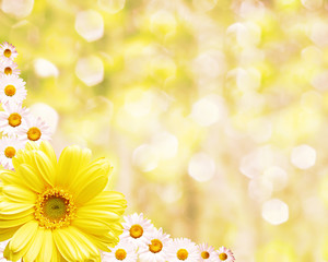 Floral border blurred background, flowers chamomile