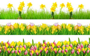 Freisteller Blumen Frühling
