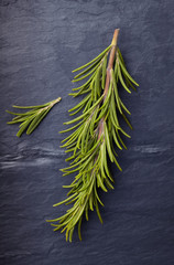 Rosemary herb on dark vintage tile slate background