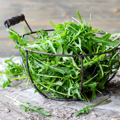 Ruccola for fresh green salad