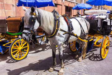 Pretty typical Andalusian horses with carriages in Seville, Spai