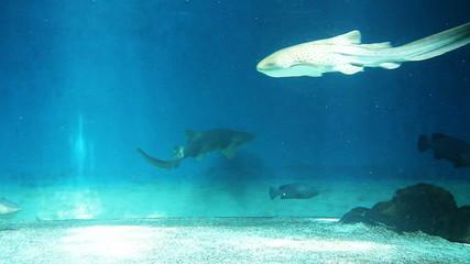 Sharks swimming in the aquarium