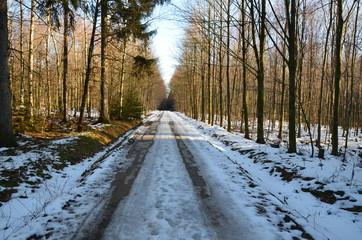 Waldweg in Winterlandschaft