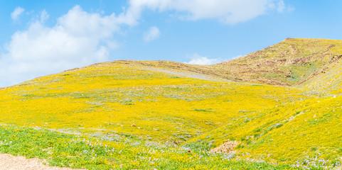 Spring in the mountain desert