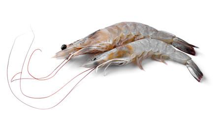 Close up banana prawn or shrimp isolated on white