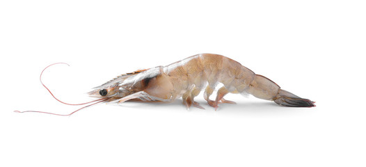 Close up banana prawn or shrimp isolated on white