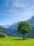 Baum auf der Alm