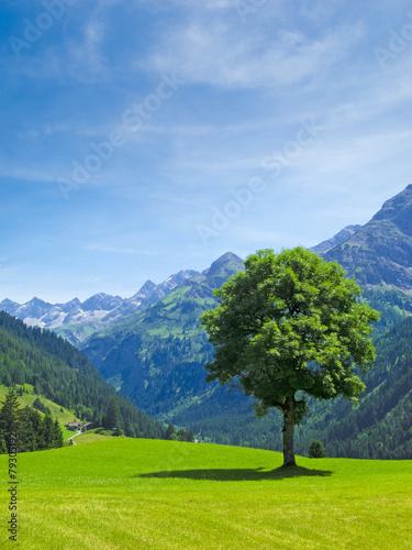 Baum auf der Alm - 79305192