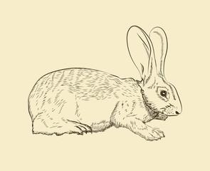 rabbit. vector sketches