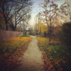 Nice Trail in the 10th district of Vienna at Autumn