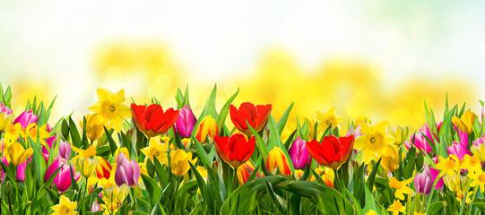 Frühlingsblumen auf der Wiese Natur