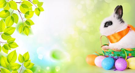 Soft bunny green wallpaper