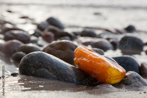 Amber stone on rocky beach. Precious gem, treasure. Baltic Sea - 79309325