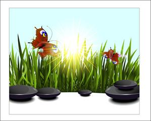 Green grass and butterflies in the sun