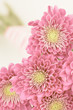 Pink daisy bouquet close up with blur