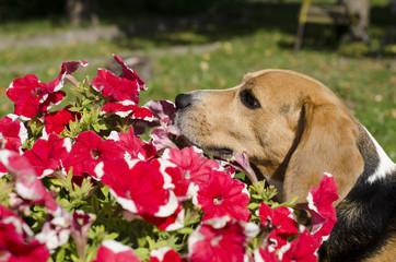 Dog & Flowers