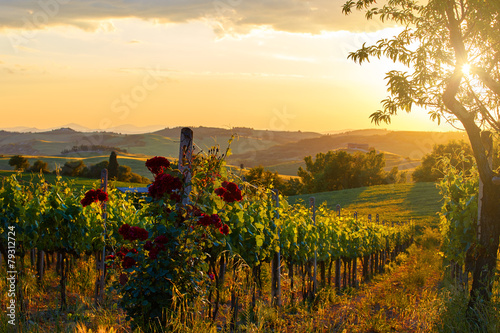 Fotobehang Heuvel Tuscany vineyards in fall
