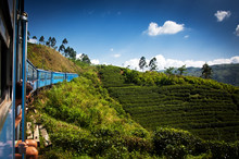 "Постер, картина, фотообои ""train from Nuwara Eliya to Kandy among tea plantations in the hi"""