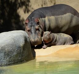Hippopotamus and Child