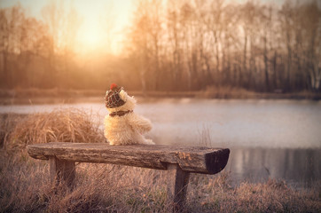 Lonely toy bear relax on bench