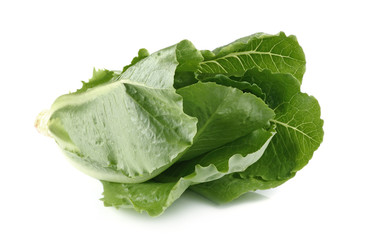 Cos Lettuce, Romaine Lettuce isolated on white