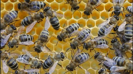 Bees convert nectar into honey