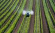 Traktor sprueht Pestizide im Weingarten - 79328563