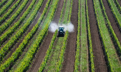 Traktor sprueht Pestizide im Weingarten