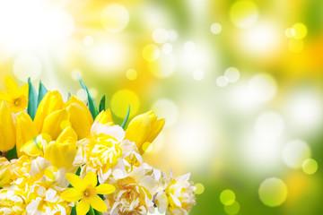 Osterglocken, Tulpen, Bokeh