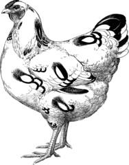 Vintage graphic chicken hen