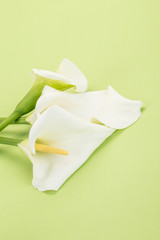 white calla lilly flowers on green