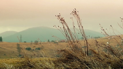 Dry Grass Sways in the Wind on Top of the Mountain at Sunset