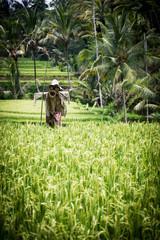 Epouvantail in Bali