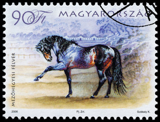 stamp printed in Hungary shows hungarian horse