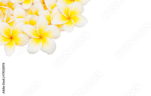 Foto op Canvas Frangipani Plumeria flower isolated on the white background