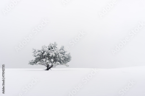 lonely tree in winter - 79342735
