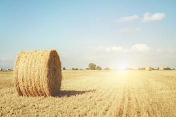 paisaje rural en verano