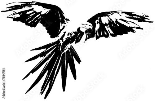 black white ara papagei schwarz wei stockfotos und lizenzfreie bilder auf bild. Black Bedroom Furniture Sets. Home Design Ideas