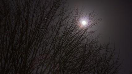Zeitraffer Sternenhimmel Mond Bäume
