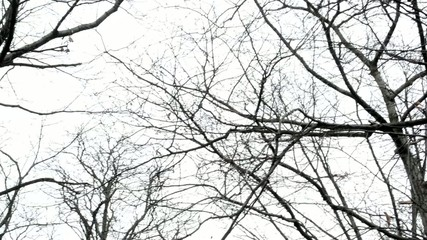forest(park) - bare tree branches - cloudy sky