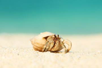 Hermit crab at beach
