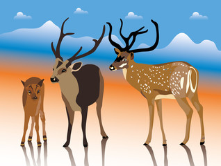deers of india illustration collection