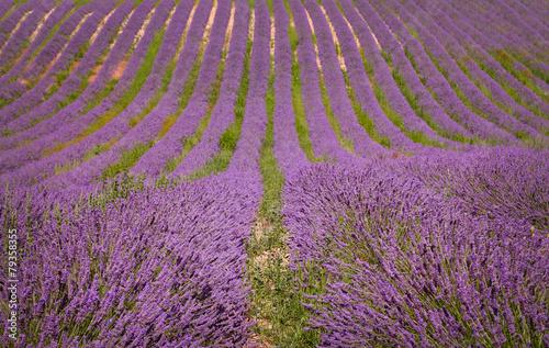 Lavender field © acnaleksy