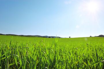 Pianura erbosa e sole nel cielo blu