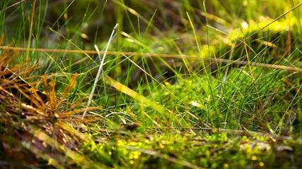 Blurred Grass Background