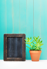 Green Plant Beside Chalkboard Leaning on the Wall